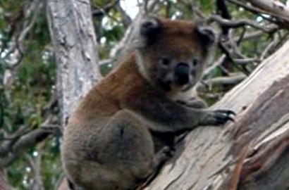 R-Australien-II-130118_010